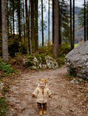 Wald – Zvieri